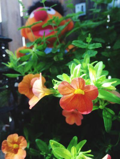 Fun Flowers Flowers ernie Pets kid pets