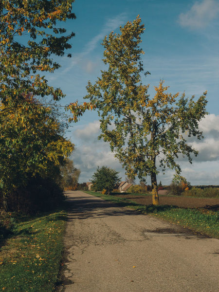 autumn in the country Autumn Autumn Colors Cloudy Light Beauty In Nature Cloud - Sky Day Field Grass Growth Landscape Nature No People Outdoors Road Scenics Sky Tranquil Scene Tranquility Tree