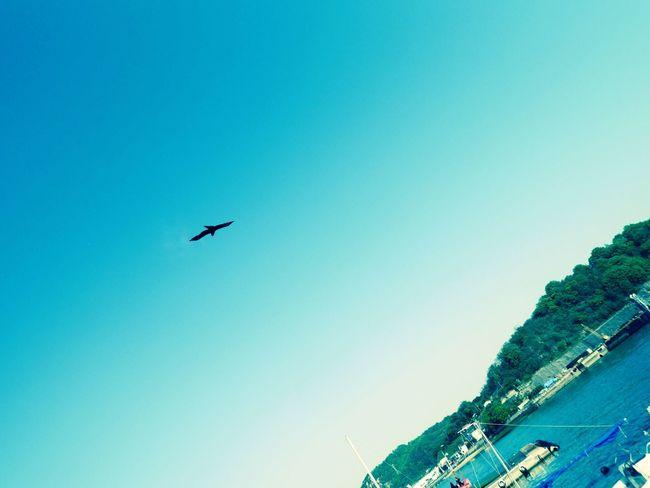 Sky Bird Colorful Blue Sea Poat Harbour Japanese  Beautiful Nature Water Hirosima Cool Holiday