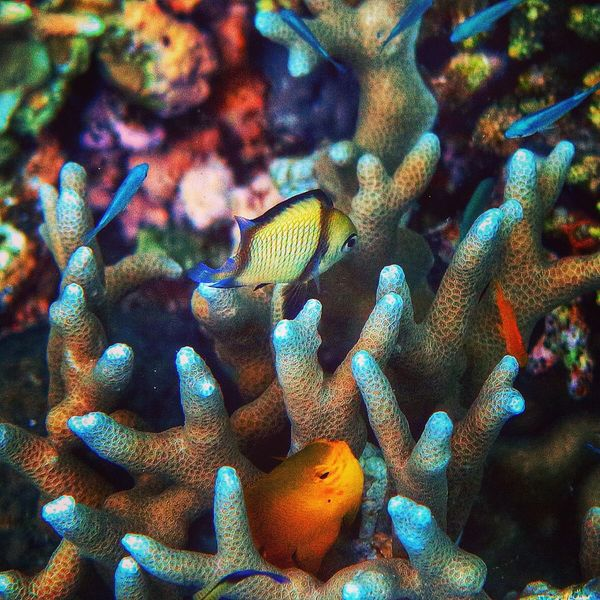 Eyeem Philippines Underwater EyeEm Nature Lover