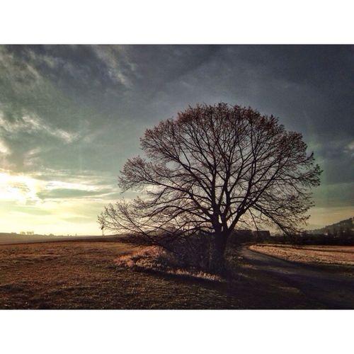 The Majestic Tree ABP Art