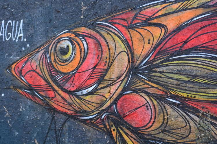 Fish Colors