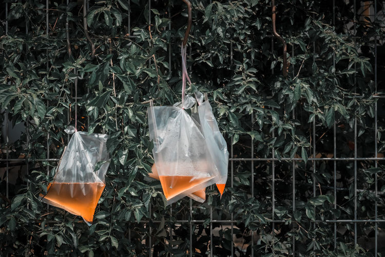 View of plastic bag attach to a fence