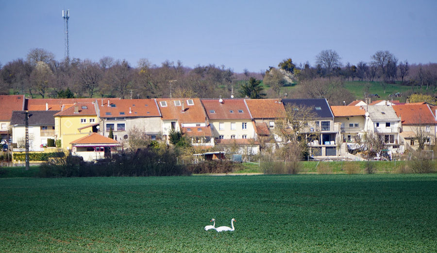 Houses on a field