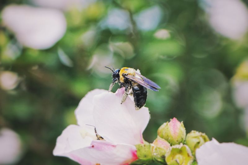 Bee's EyeEm