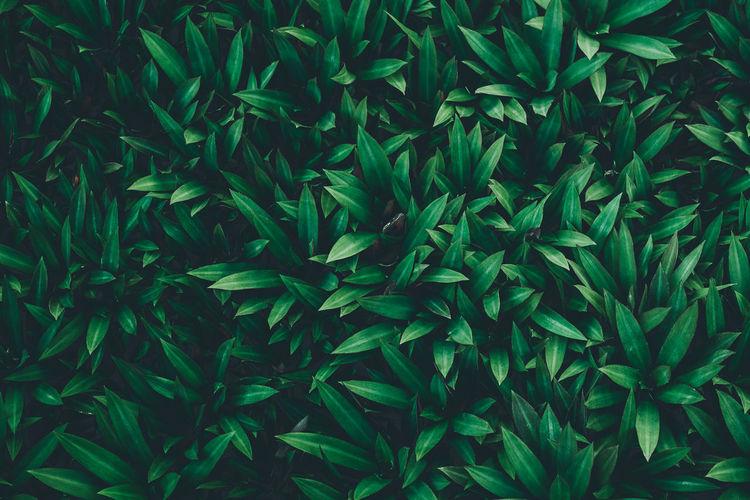 Full frame shot of fresh green plants
