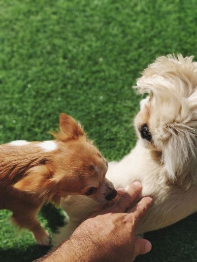 Pets Human Hand Dog Cute Puppy Young Animal Close-up Grass Purebred Dog