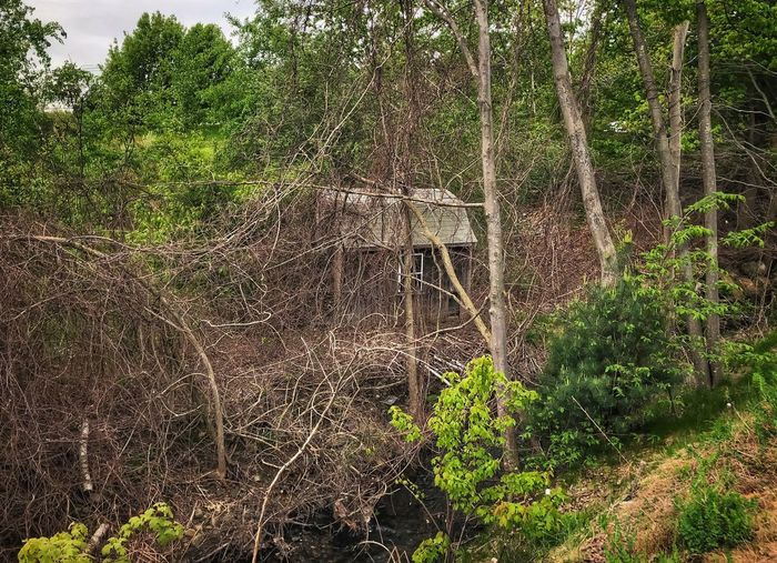 Abandoned & Forgotten Shed in the Wilderness Plant Tree No People Growth Nature Day Green Color Full Frame Beauty In Nature Backgrounds Outdoors Forest Land Water Pattern Complexity Tranquility