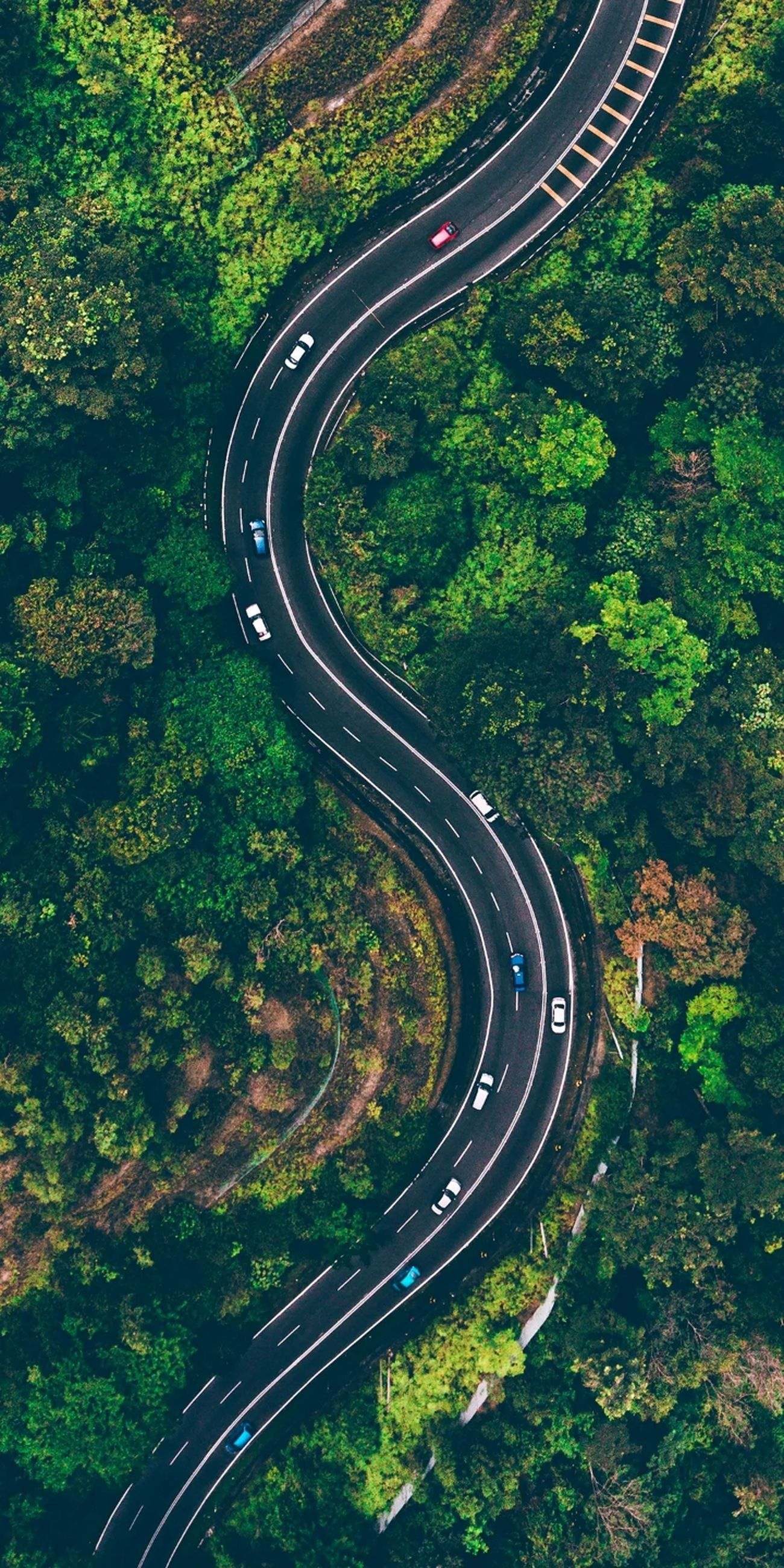 transportation, road, curve, plant, tree, high angle view, mode of transportation, nature, no people, highway, aerial view, day, street, land vehicle, marking, road marking, green color, land, motion, growth, outdoors, multiple lane highway