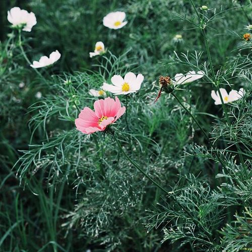 | 💚🌸🍃👆 | Vscocam VSCO Vscovietnam Vscoflowers Vscofilm Flower Green Fresh Dalat Tb Morning Country Countryside Streetphotography Ontheroad Photooftheday Photos Plant Nature Photo Instagood Instadaily Instamood
