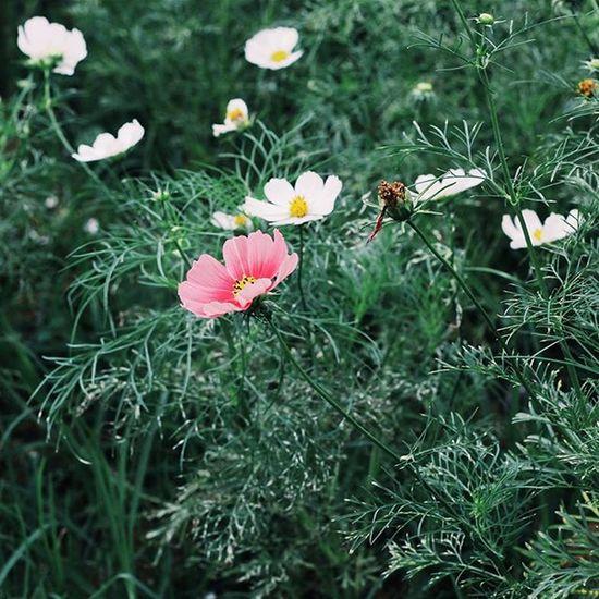 | 💚🌸🍃👆 | Vscocam VSCO Vscovietnam Vscoflowers Vscofilm Flower Green Fresh Dalat Tb Morning Country Countryside Streetphotography Ontheroad Photooftheday Photos Plant Nature Photo Instagood Instadaily Instamood