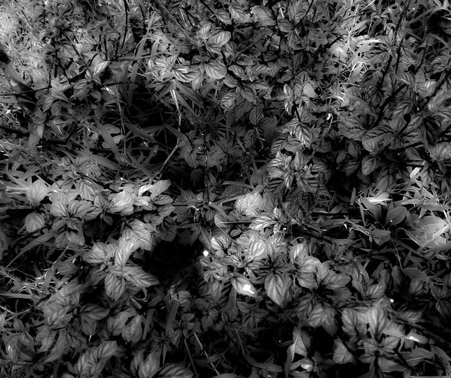 Nature Full Frame Plant Growth No People Backgrounds Day Outdoors Fragility Close-up Beauty In Nature Flower Tree Freshness Bw Photography Bw_lover Bw_collection Bw Bwphotography EyeEmNewHere The Week On EyeEm Eyeem Photography EyeEm Best Edits Eyeemphoto EyeEm Selects