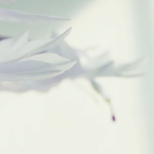 Schlumbergera Macro_flower Macroflower Macro Macro Nature Macro_collection Macro Beauty Macro Photography Macrophotography Macrogardener Macroworld_tr