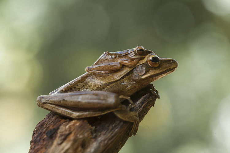 Tree frog on nature place