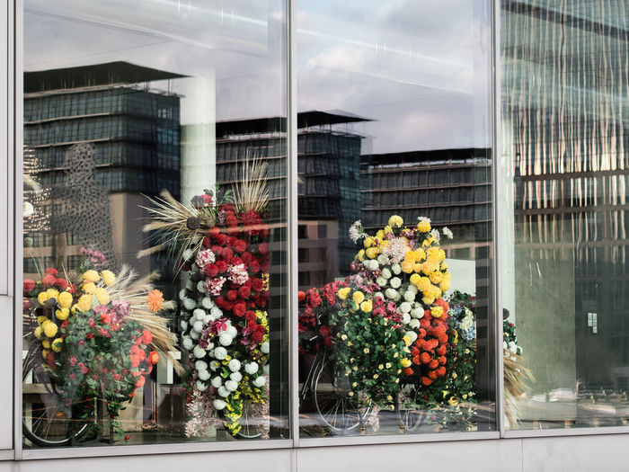 Flower Flowering Plant Plant Glass - Material Building Exterior Window Architecture Built Structure Nature Transparent City Reflection No People Day Freshness Vulnerability  Fragility Outdoors Building Retail Display Flower Arrangement Glass Flower Head Bouquet Arts Culture And Entertainment Bunch Of Flowers Window Display Store Window