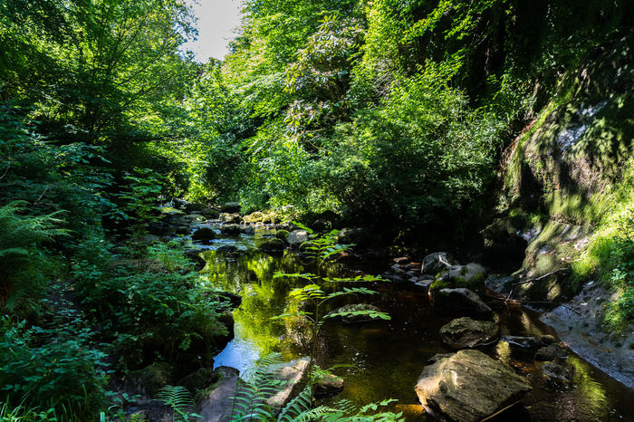 Tranquil views Growth Nature Tree Outdoors Water No People Day Green Color Full Frame Backgrounds Beauty In Nature Forest Sky Scotland Beauty In Nature