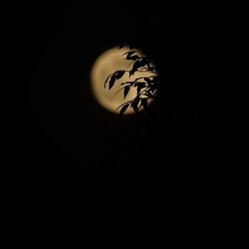 Hidden moon Moon Night No People Sky Nature Black Background Goodsight Close-up Dark Dark Photography Leaves🌿 Blackleaves Siluet Newhere ✌️ Good Night First Eyeem Photo