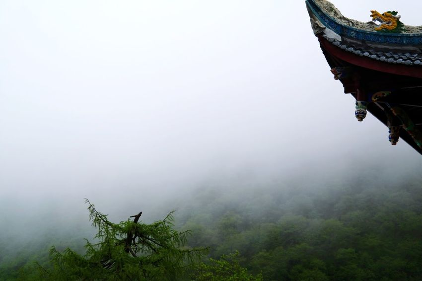 Fog Nature Outdoors Tree Beauty In Nature Sky