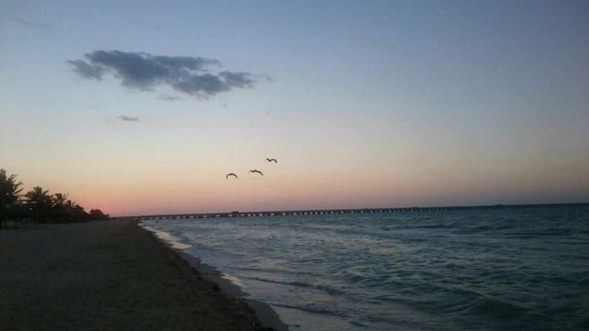 Sea Water Scenics Beauty In Nature Nature Sunset Tranquility Horizon Over Water Sky Bird Flying Tranquil Scene Outdoors No People Animal Themes Beach Day Flying Birds Flying High Flying In The Sky Flying Bird Beachphotography Beach Day Flying Over Your Imagination Flyingbirds