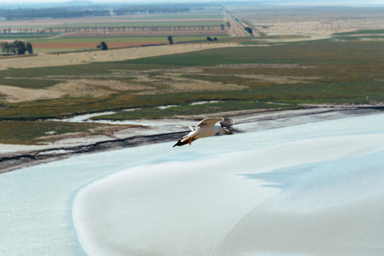 Bird flying over a land