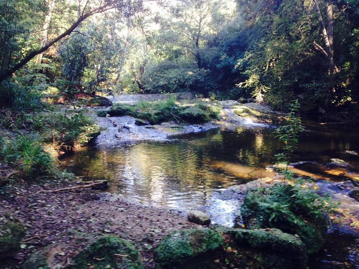 The Brague River Provence Valmasque Brague Nature Tranquility Beauty In Nature Water Tranquil Scene Tree Forest Scenics Outdoors Idyllic No People