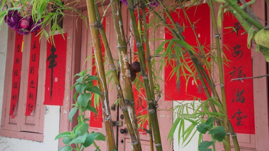 Art Bamboo Chinese Writing Close-up Historic Mela Melaka Streets Painted House Plant Red