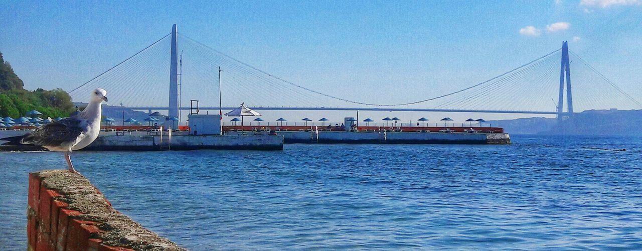 🛳YavuzSultanSelimKöprüsü Bridge Sea Blue Sky Nature Bird Water Türkiye Istanbul Sarıyer