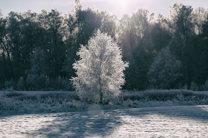 Enlightened (edit) - Beauty In Nature Cold Temperature Day Drastic Edit Enlight Enlightened Exceptional Photographs EyeEm Best Edits Frozen Frozen Nature Hello World Idyllic Landscape Nature No People Outdoors Scenics Sky Snow Sunbeam Sunlight Tranquility Tree Winter Winter Wonderland