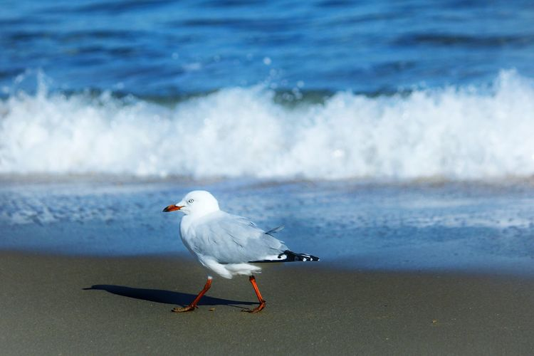 Seagull On Shore Against Wave