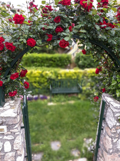 Roses are red, violets are blue Roses Red Roses Garden Bench Peace Peace Of Mind Spring Springtime Springtime Blossoms Springtime Flowers Gate Gateway Entry Flower Front Or Back Yard Grass Plant Close-up Domestic Garden Petal In Bloom Growing Blooming Fragility Plant Life Flower Head