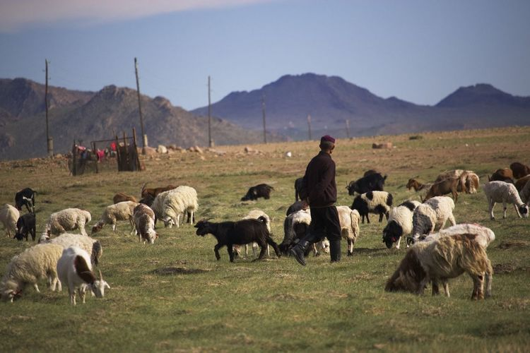 Animal Animal Head  Animal Themes Arid Climate Day Domestic Animals Fence Field Friendship Grass Herbivorous Khovd Khövsgöl Livestock Mammal Mongolia No People Nomadiclife One Animal Relaxing Togetherness Two Animals Zoology
