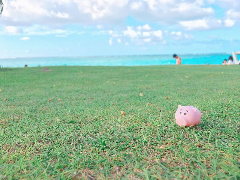 50+ Pig Beach, Big Major Cay Pictures HD | Download