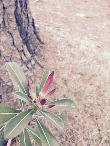 EyeEmNewHere EyeEm Best Shots Desertrose Beauty In Nature Followme