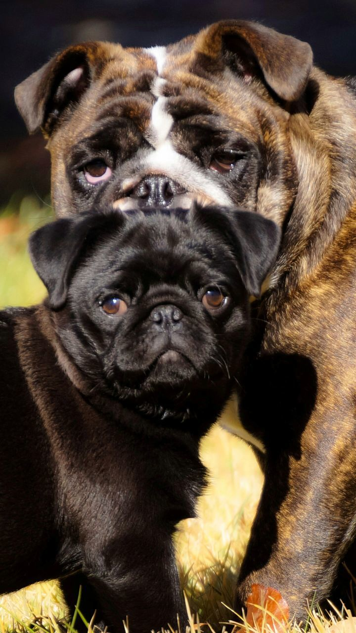 Close-Up Portrait Of Dogs Standing On Field
