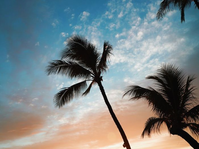 Low angle view of silhouette palm tree against sky during sunset