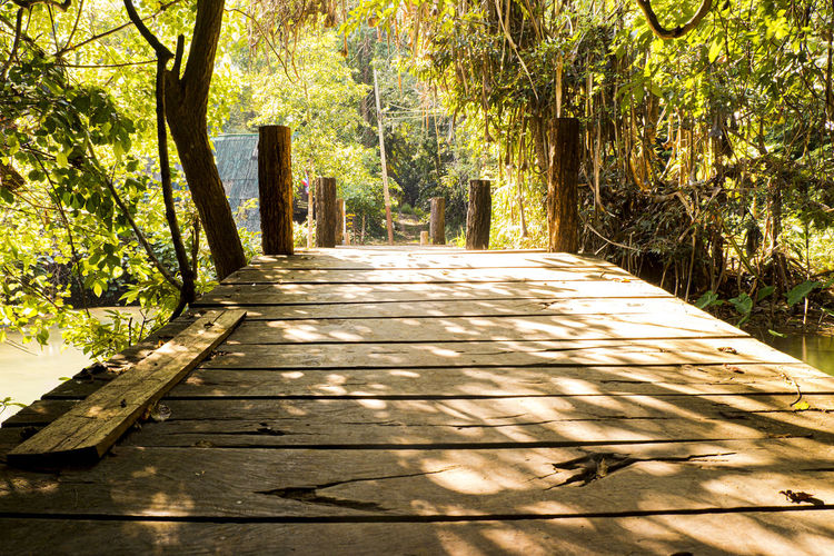 Surface level of wooden walkway along trees in forest