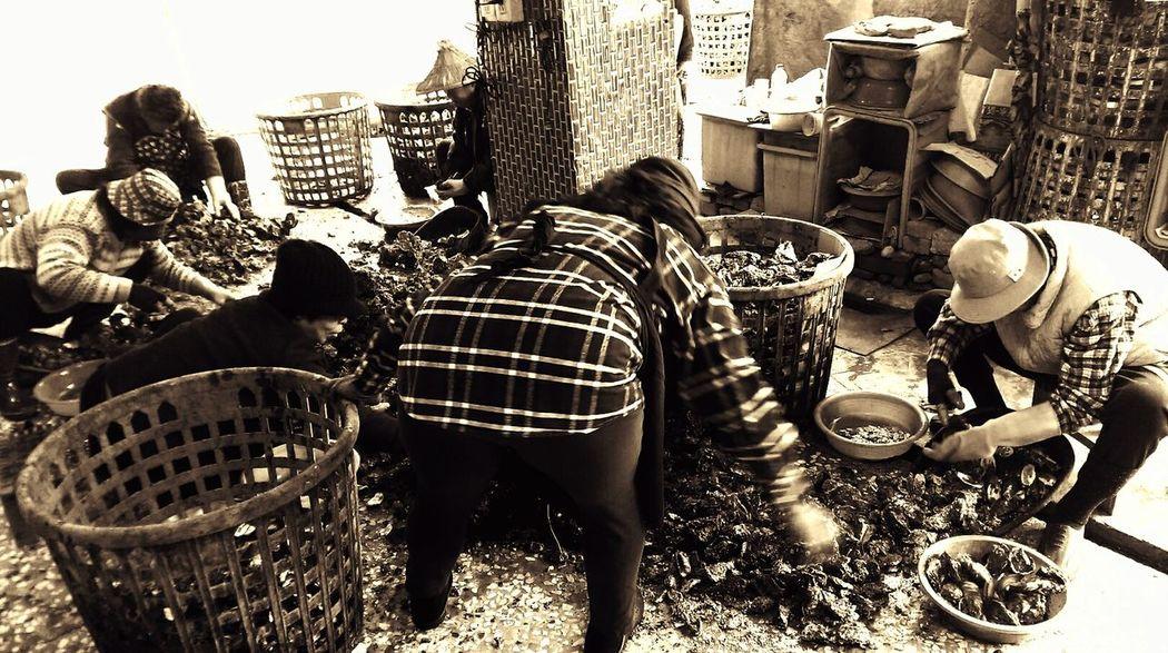 老漁民..手腳厲落分解滿是尖銳硬殼的安平養殖的蚵仔