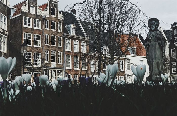 Building Exterior Architecture Built Structure Bare Tree Tree City Winter Outdoors Day Snow Cold Temperature Holland Dutch Vscocam IPhone Photography City Architecture VSCO IPhoneography IPhone Photographer Amsterdam Amsterdamcity Travel Travel Photography