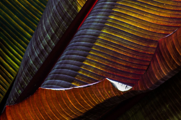 Veins In Leaves Backgrounds Beauty In Nature Brown Close-up Day Design Full Frame Indoors  Leaf Leaf Vein Multi Colored Natural Pattern Nature No People Pattern Plant Part Textured
