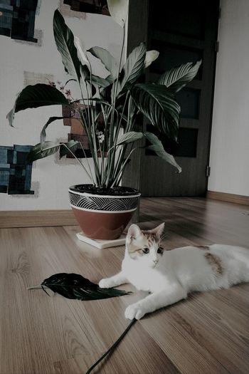 Cat Cat And