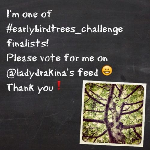 Wow, my #tree is one of finalists of ladydrakina's #earlybirdtrees_challenge. If you like it, please vote for it on ladydrakina's feed. Appreciate it ?? Thank You❕? Tree Earlybirdtrees_challenge Earlybirdtrees_finalist
