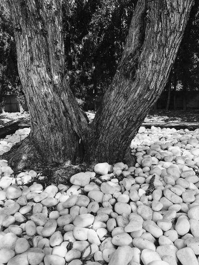 Stones on tree trunk