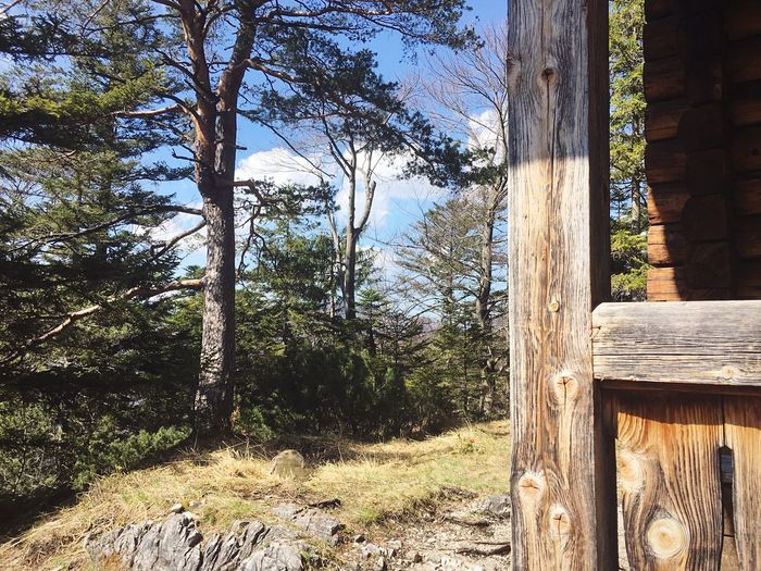 Tree Wood -