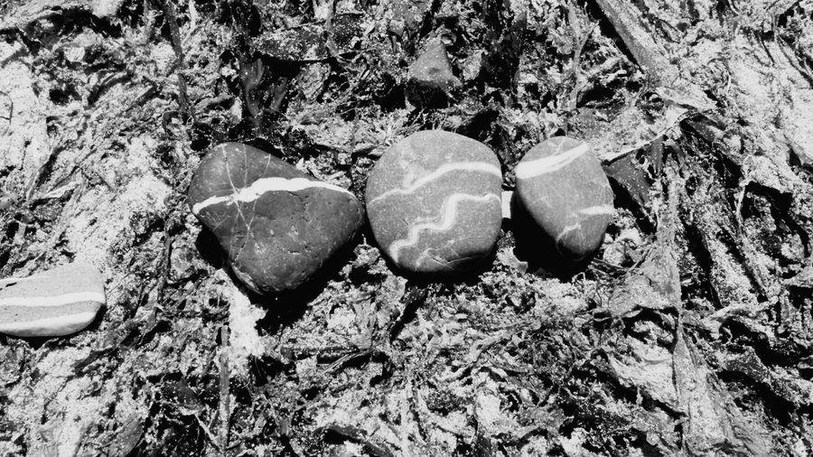 Black And White Monochrome Photo Of The Day Transient Art Installation Environmental Art Tiny Art Project EyeEm Best Shots Eye4photography  United Kingdom Cornwall Abandoned Beach Photography Random Natural Check This Out Taking Photos Art