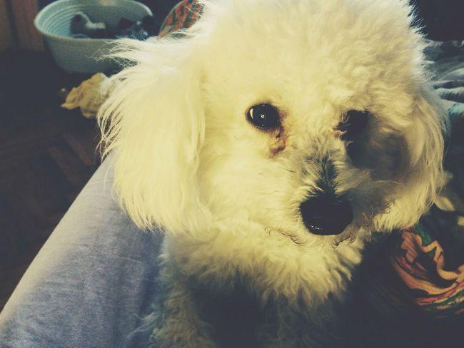 My puppy ❤️❤️❤️ Ari Puppy Dog Iloveyou