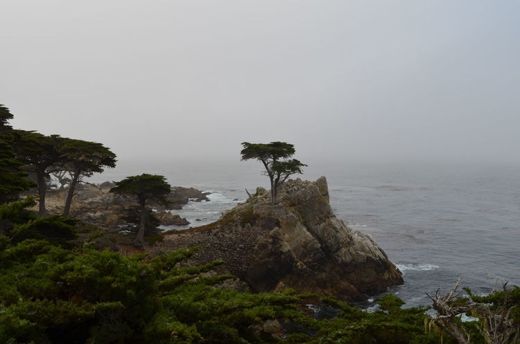 #Waves #pacificocean #the Lone Cypress Beauty In Nature Day Fog Landscape Nature No People Outdoors Rock - Object Scenics Sky Tranquil Scene Tranquility Tree Colour Your Horizn The Great Outdoors - 2018 EyeEm Awards The Traveler - 2018 EyeEm Awards