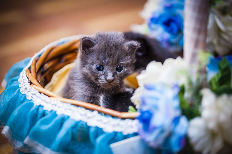 Close-up of kittens in decorated basket
