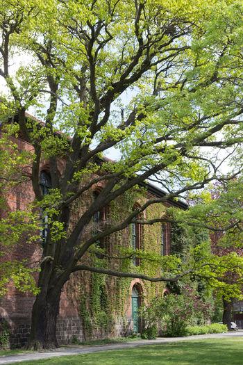 Berlin Köpenick Altstadt Berlin Dorfkirche Frühling Kirche Arch Architecture Baum Beauty In Nature Blühen Building Exterior Built Structure Day Green Color Growth Köpenick Nature No People Outdoors Sky Tree