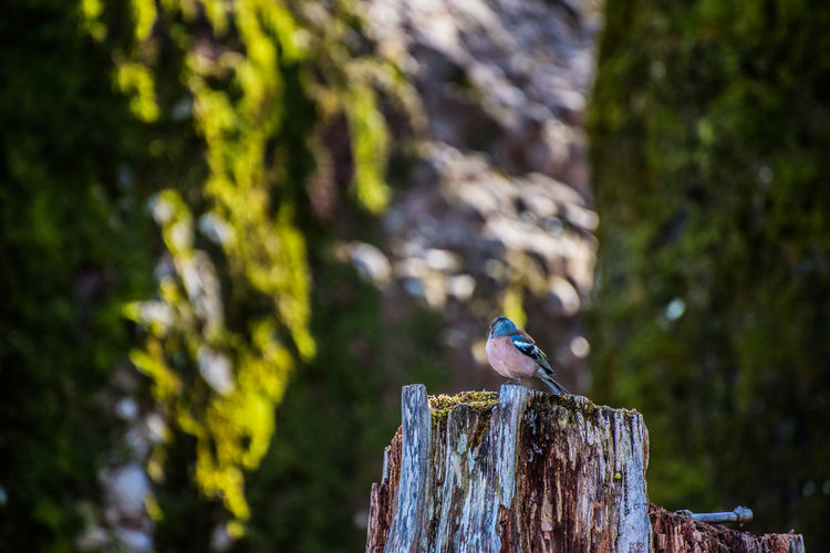 Bird perching on tree stump in forest