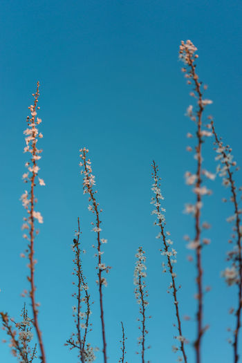 Plant Sky Growth Low Angle View Beauty In Nature Blue No People Nature Day Clear Sky Tranquility Flower Flowering Plant Fragility Vulnerability  Close-up Outdoors Freshness Sunlight Tree Spring